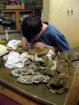 A volunteer preparing a triceratops fossil at the Academy of Natural Sciences in Philadelphia.