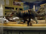 Triceratops figurine at the Academy of Natural Sciences in Philadelphia.